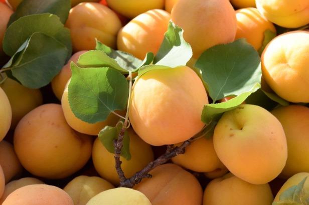 apricots-1455431_960_720